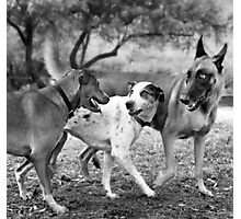 The Latest Gossip At The Dog Park.  Photographic Print