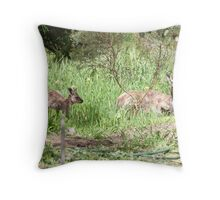 Floe is trusting me as she relaxes near the house. 'Arilka' Spring. Throw Pillow