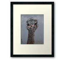 Ostrich 1 Framed Print