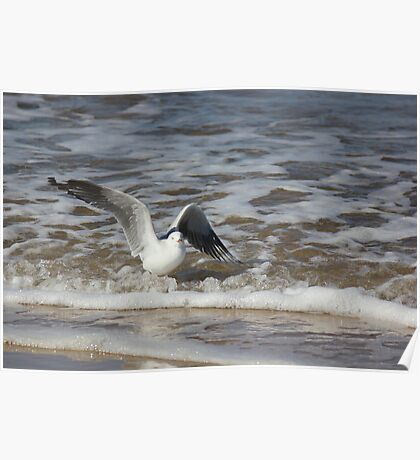 Surfing Seagull Poster