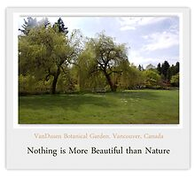 Nothing is more beautiful than nature.  Spring willow trees  by naturematters