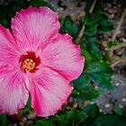 Hibiscus # 4 by Ken Baugh