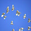Cockatoos taking Flight by Kymbo
