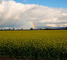 Spring on the farmlands by Cameron B