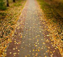 fallen leaves by mrivserg