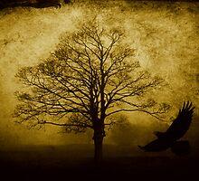 Misty Woodland by Ian Jeffrey
