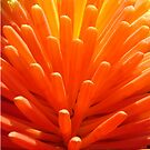 hot poker iphone by KazM