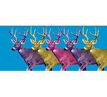 Longer deer Photographic Print