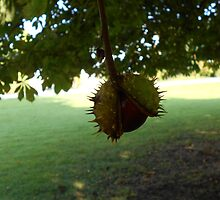 Conker  by Rosie Newman