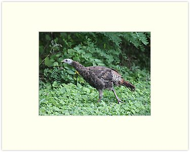 Milwaukee Wild Turkey by Thomas Murphy