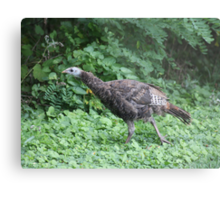 Milwaukee Wild Turkey Metal Print