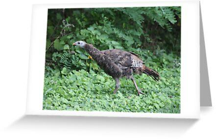 Milwaukee Wild Turkey by Thomas Murphy
