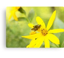 Little Butterfly on Bright Yellow Flower Canvas Print