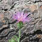 Thistle Bloom in Front of Fallen Tree by Ingasi