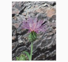 Thistle Bloom in Front of Fallen Tree Kids Clothes