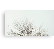 Tree Crown Without Leaves Canvas Print