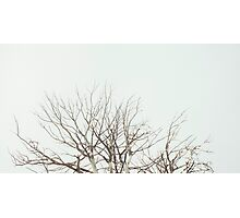 Tree Crown Without Leaves Photographic Print