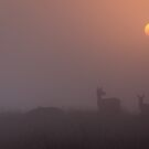 Deer Sunrise by James Grant