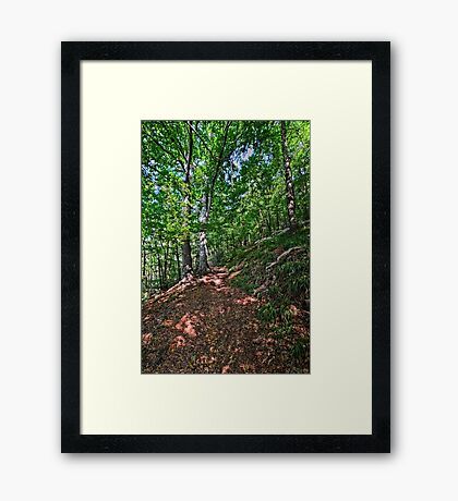 Back to the forest in Trooz, Belgium Framed Print
