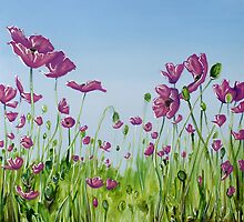 Field of Pink Poppies by Cherie Roe Dirksen
