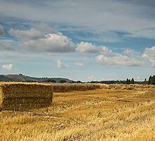 After the harvest  by Judi Lion