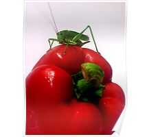 Cricket and Pepper Poster