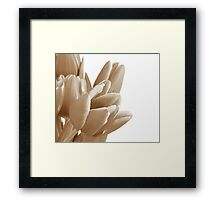 Tulips on a white background Framed Print