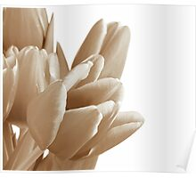 Tulips on a white background Poster