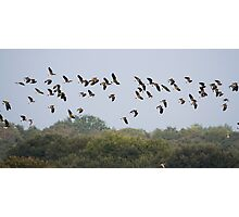 Flock In The Sky.. Photographic Print