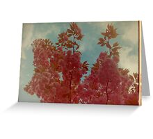 Cherry Blossom. Greeting Card