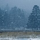 Snowflakes in the Evergreens by Photopa