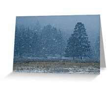 Snowflakes in the Evergreens Greeting Card