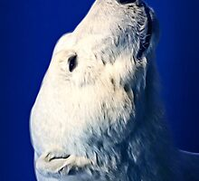 Polar bear by recklessrocker