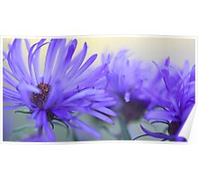 New England Fall Asters - OnThe Wild Side  Poster
