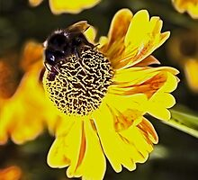 Bee on a flower by recklessrocker