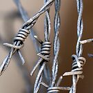Barbed Wire by Fizzgig7
