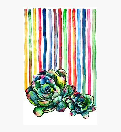 Rainbow Succulents Photographic Print