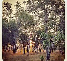 Northern Territory Outback by AngeliqueSinton