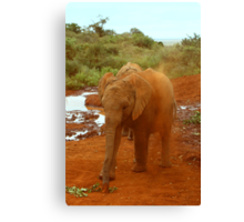 Baby Elephant Kicking Up Dust Canvas Print