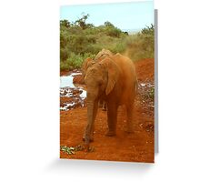 Baby Elephant Kicking Up Dust Greeting Card