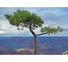 Grand Canyon Tree Study 5 Photographic Print