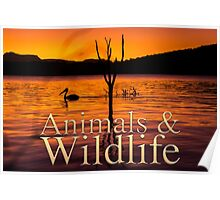 Animals and Wildlife Calendar Cover Poster