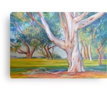 Gum Tree in the Park Metal Print