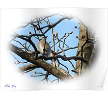 Blue Jay (10) Poster