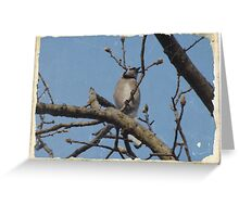Blue Jay (11) Greeting Card