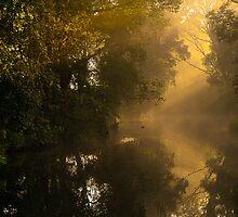 The Golden Light by Matthew Post