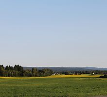 Just a late summer landscape. Farmland. Afternoon. Løten, Norway. by UpNorthPhoto
