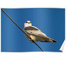 Red-eyed Kite Poster