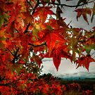 Changing Seasons by Charles & Patricia   Harkins ~ Picture Oregon