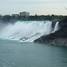 American Falls w Seagull by Barry W  King
